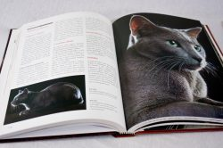 Diagramação do livro Larousse dos Gatos